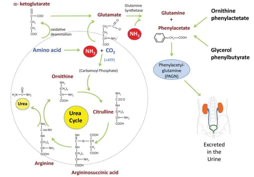 Peran ammonia scavenger salah satu anggota obat-obatan termahal di dunia