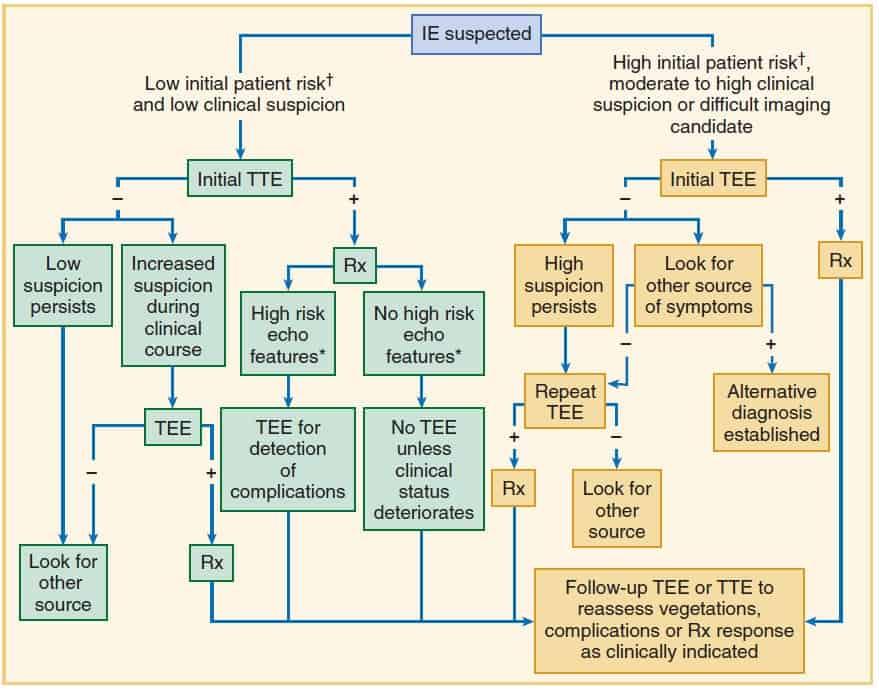 Alur diagnosis kasus dengan kecurigaan infective endocarditis