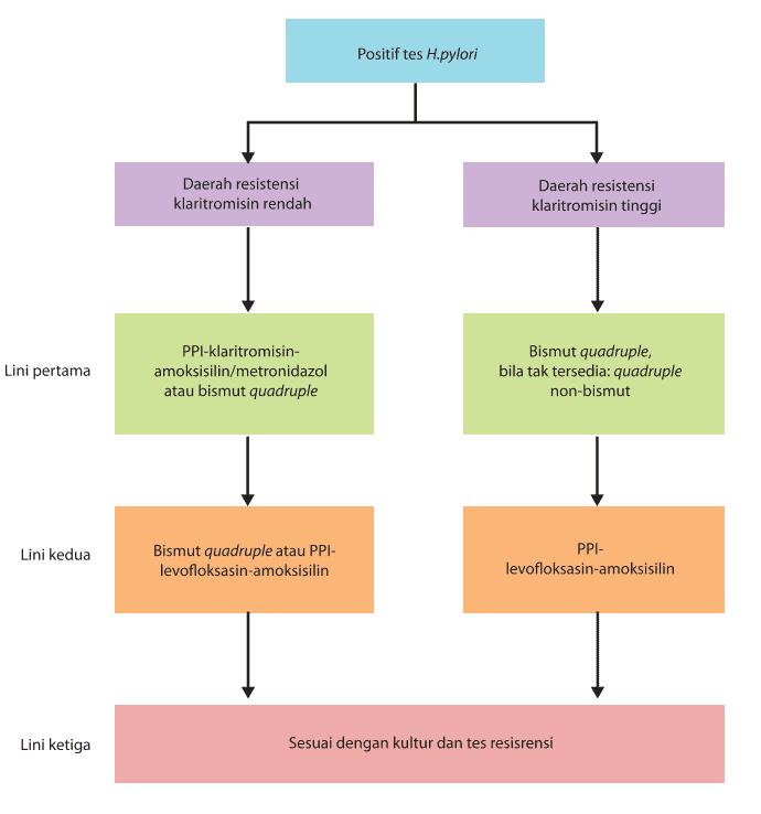 Alur tatalaksana pengobatan H. pylori di Indonesia
