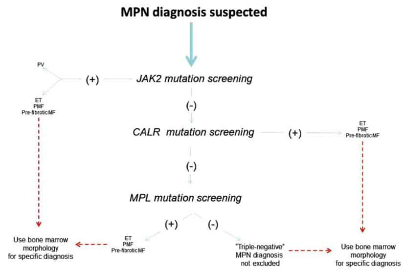 Alur diagnosis MPN