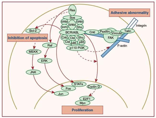 Gambar fungsi BCR/ABL