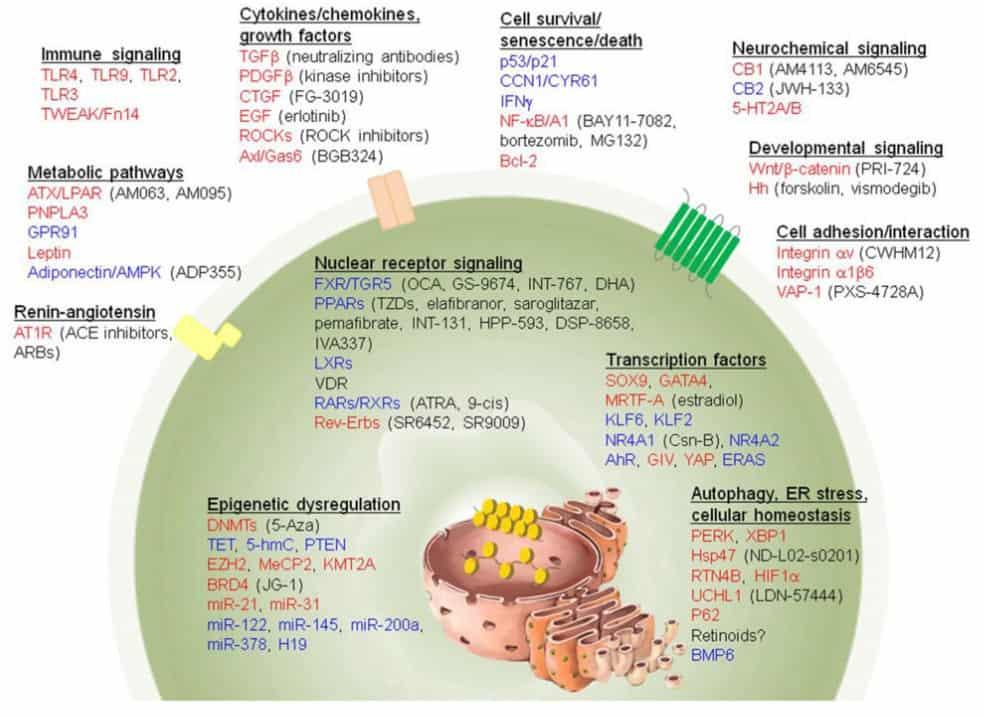 Berbagai pengobatan yang menargetkan sel stelata
