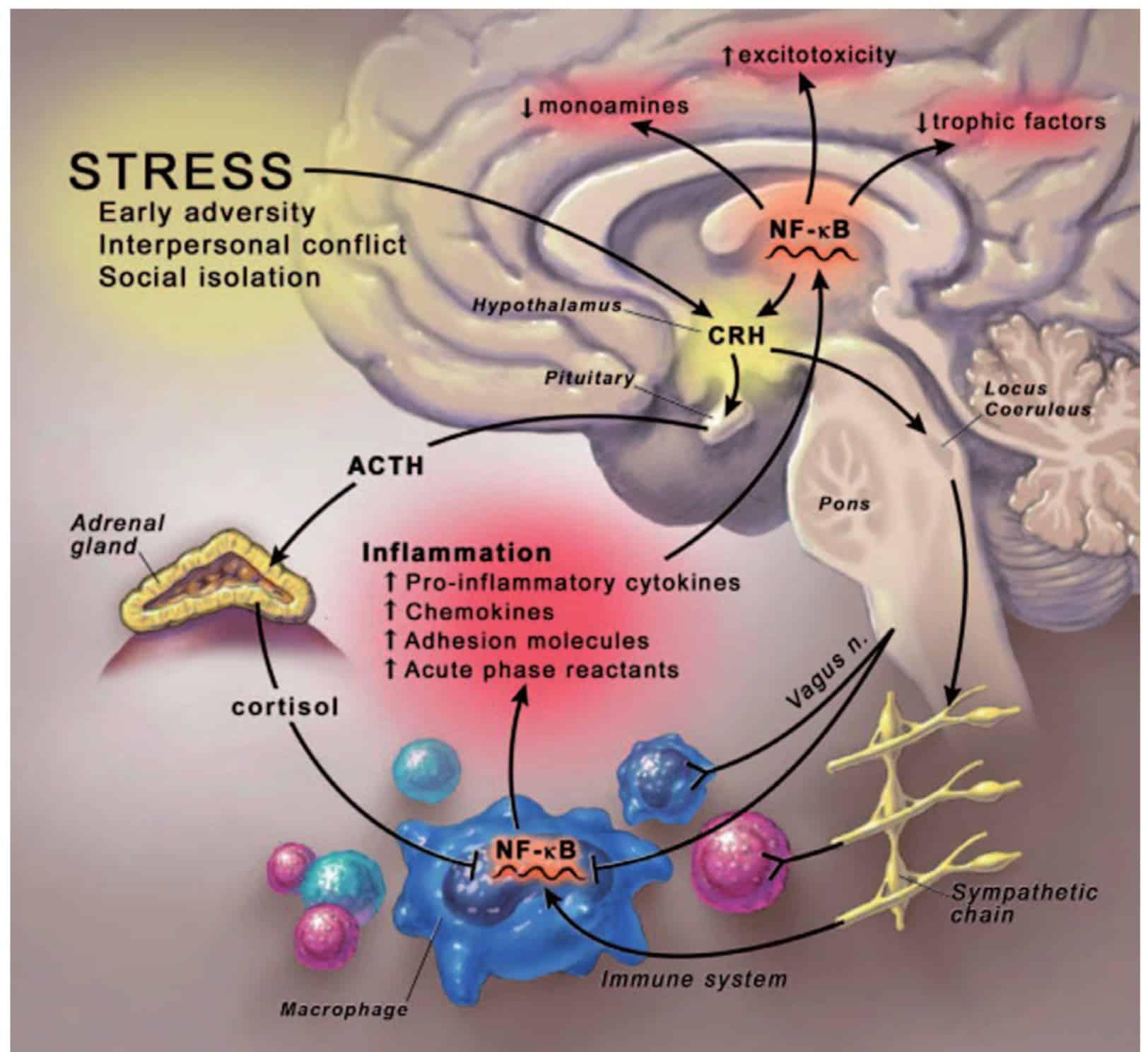 Hubungan timbal balik sitokin inflamasi sebagai faktor pencetus depresi