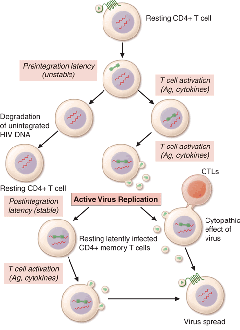 HIV laten dan aktivasi virus laten menjadi aktif