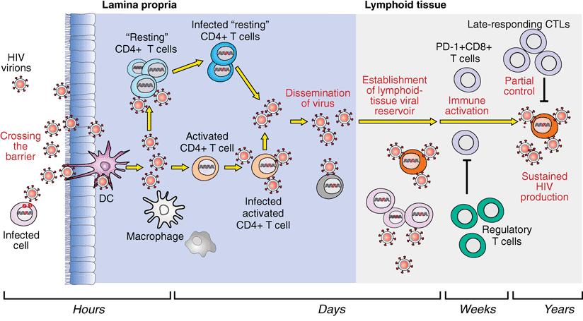Proses entri infeksi primer HIV