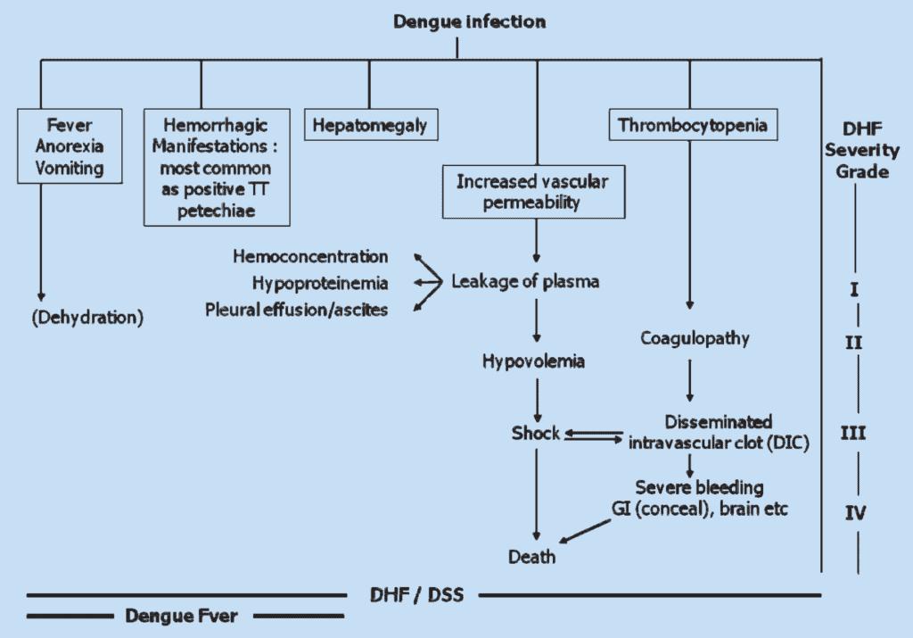 Klasifikasi dan derajat infeksi dengue