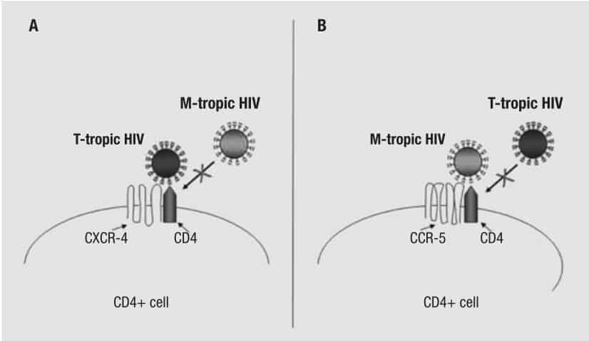 HIV dengan tropisme CXCR4 dan dengan tropisme CCR5
