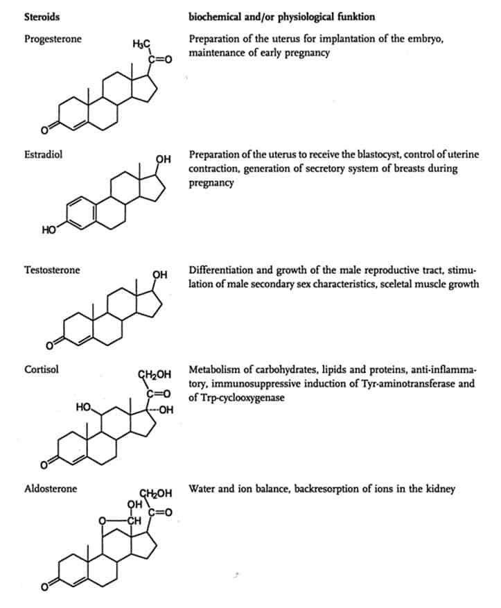 Contoh jenis hormon steroid