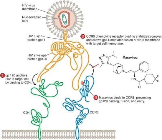 Mekanisme kerja entry inhibitor