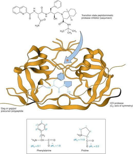 Mekanisme kerja protease inhibitor