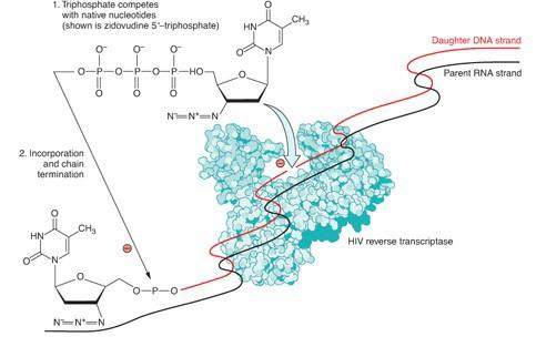 Penjelasan mekanisme NRTI menghambat reverse trasncriptase HIV