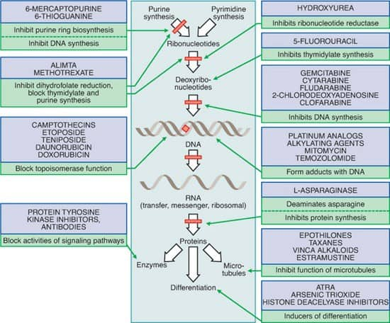 Gambar mekaniske kerja obat kemoterapi beserta pembagian jenis obat kemoterapi berdasarkan cara kerjanya.