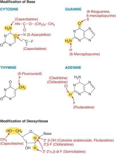 Modifikasi basa dari DNA untuk memproduksi analog purin dan pirimidin