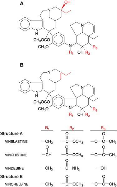 Gambar struktur molekul jenis obat kemoterapi alkaloid vinca
