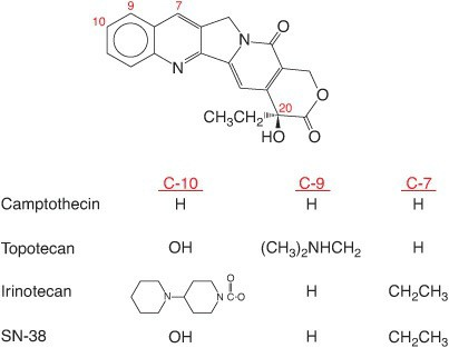 Gambaran molekul dari jenis obat kemoterapi analog camptothecin