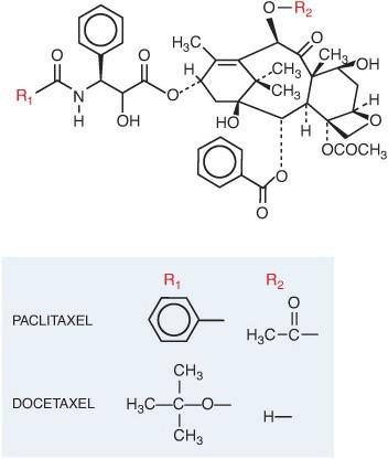 Gambar struktur molekul taxane