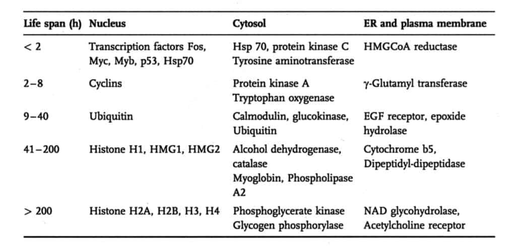 Waktu Paruh Beberapa Protein