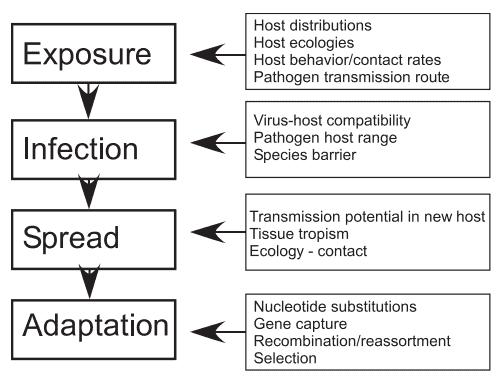 Proses perpindahan transmisi infeksi antar spesies