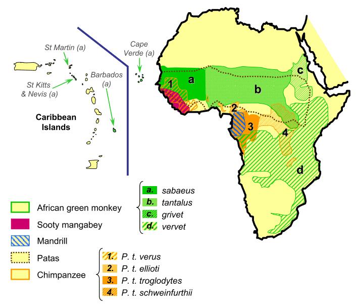 Sebaran geografis SIV di Afrika