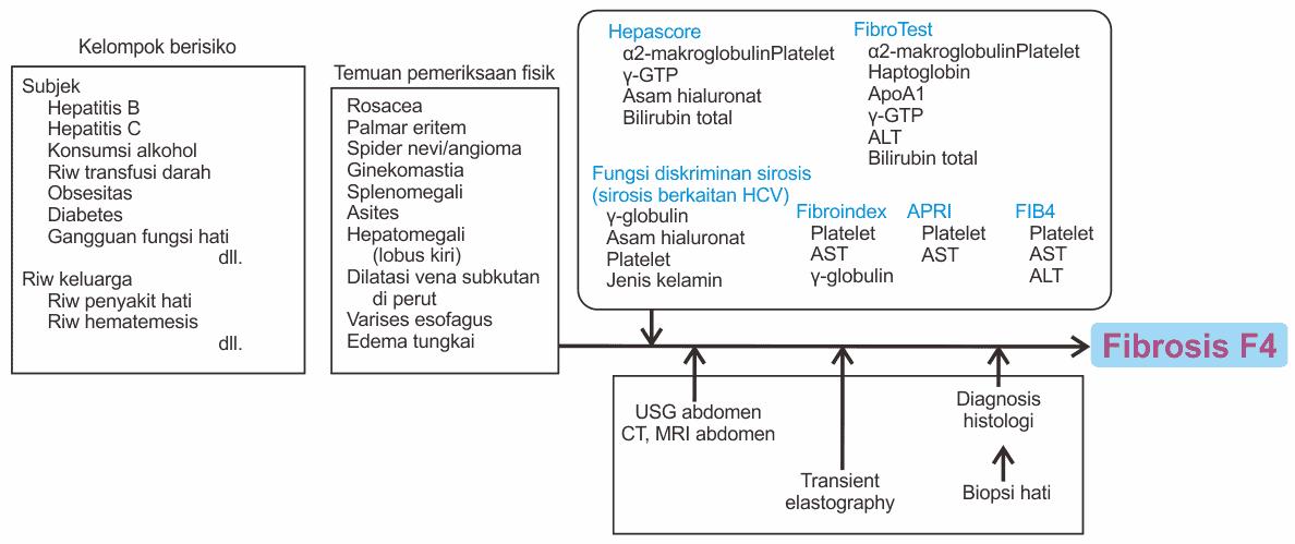 Alur diagnosis sirosis hati