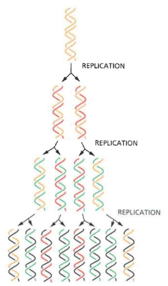 Sifat semikonservatid replikasi DNA