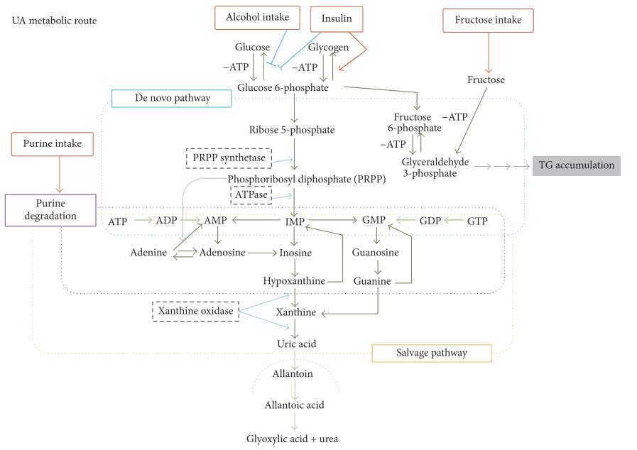 Skema metabolisme purin dan pembentukan asam urat