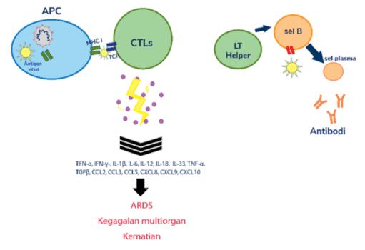 Respon imun pada COVID-19