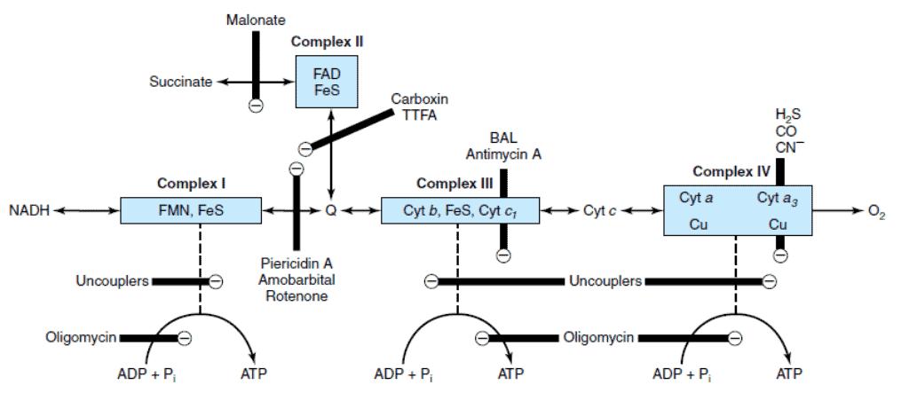 Inhibitor rantai transpor elekton