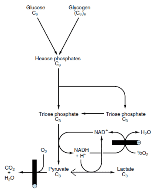 Ringkasan reaksi glikolisis