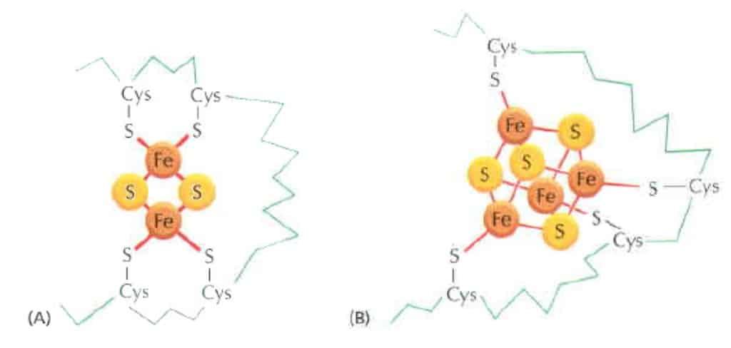 Karier elektron dengan inti besi sulfat