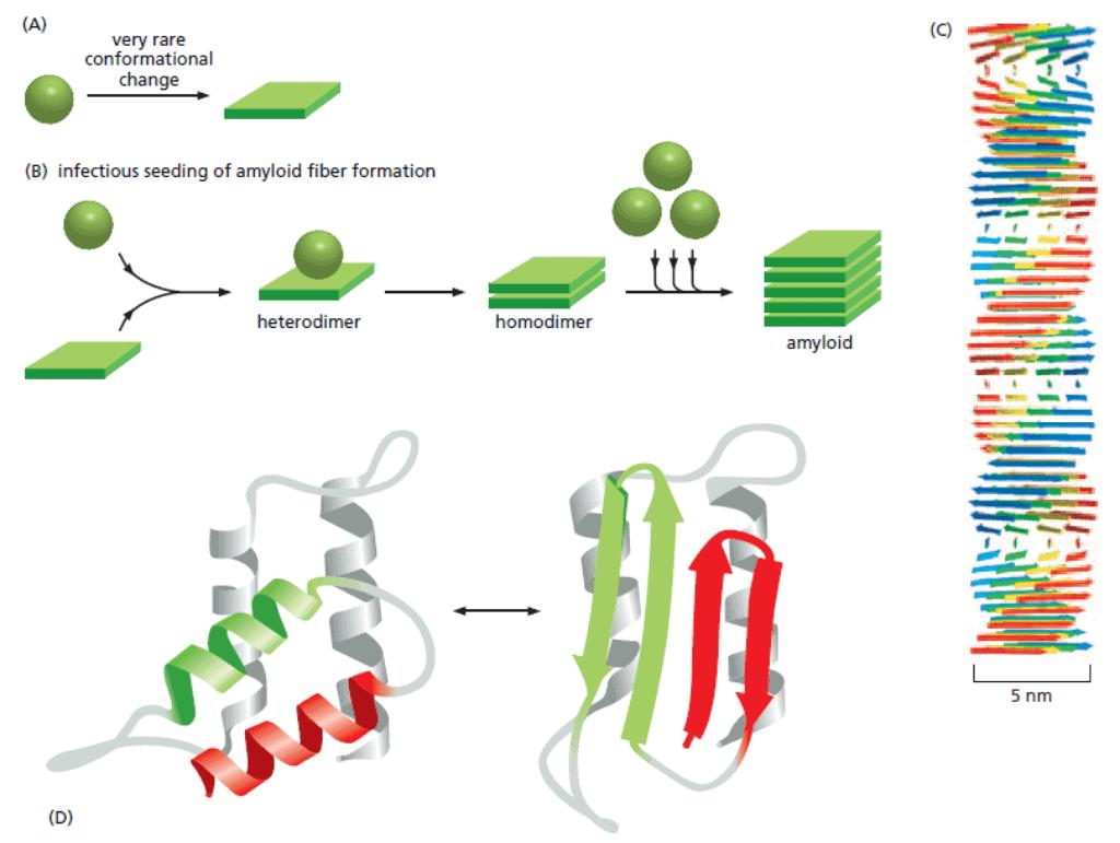 Protein agregat yang menyebabkan penyakit