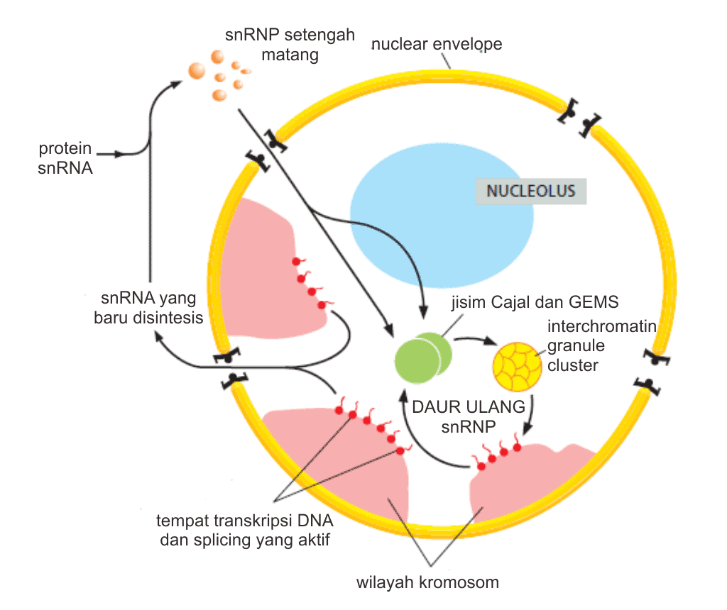 Gambar skematik struktur subnuklear