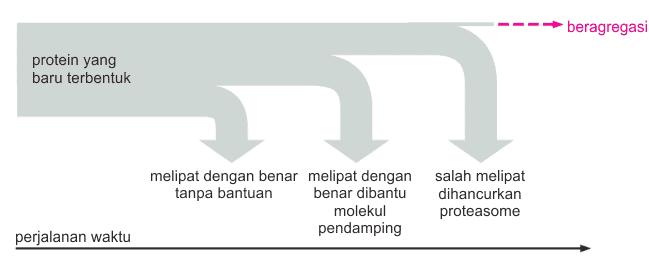 Mekanisme kontrol kualitas pelipatan protein