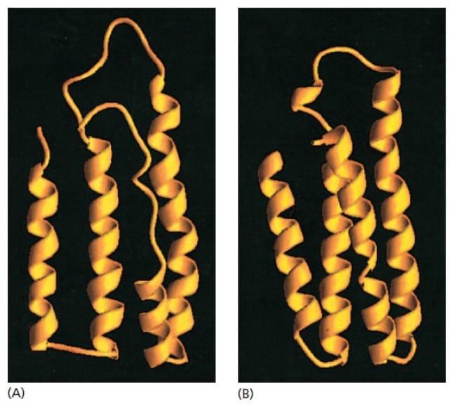 Struktur molten globule dari protein yang baru disintesis