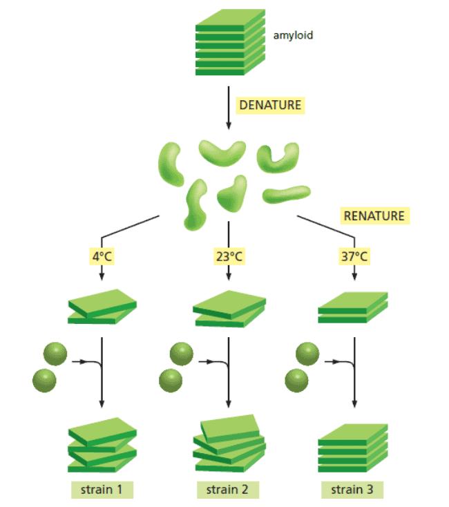 Sintesis protein strain prion secara in vitro