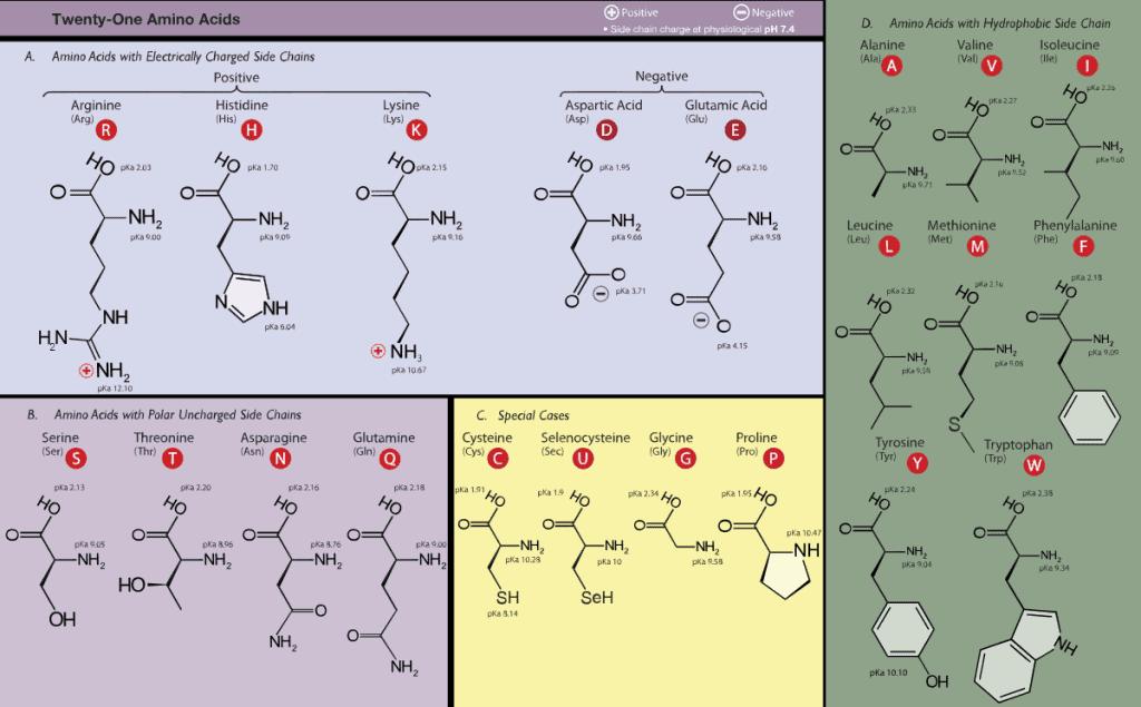 Nama, sifat, dan struktur asam amino