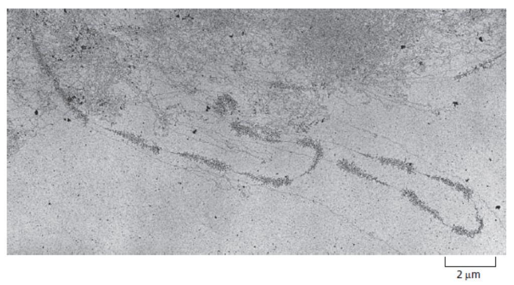 Transkripsi gen rRNA yang tersusun berdekatan