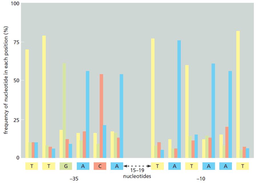 Variasi kode inisiasi transkripsi DNA pada E. coli