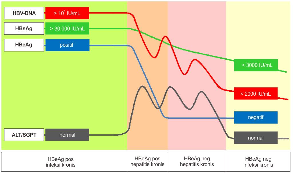 Pola serologi pada fase infeksi hepatitis B kronik