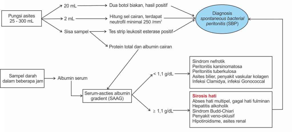 Alur diagnosis asites dan SBP