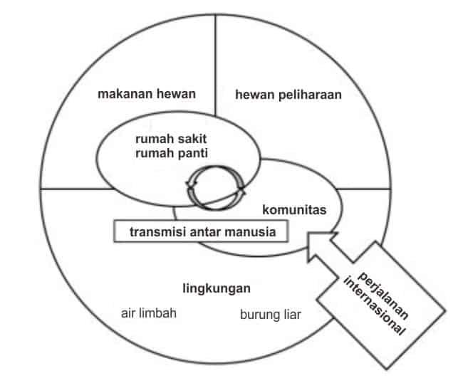Faktor ekologi yang berperan dalam penyebaran ESBL