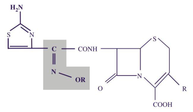 Struktur oxyimino-aminothiazolyl cephalosporin