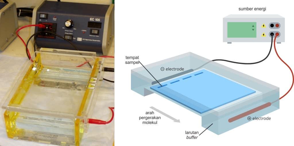 Alat elektroforesa