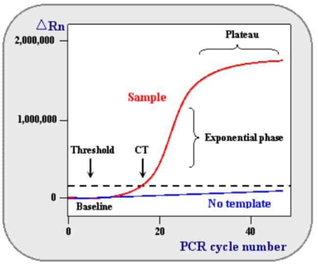Grafik plot data pada real-time PCR