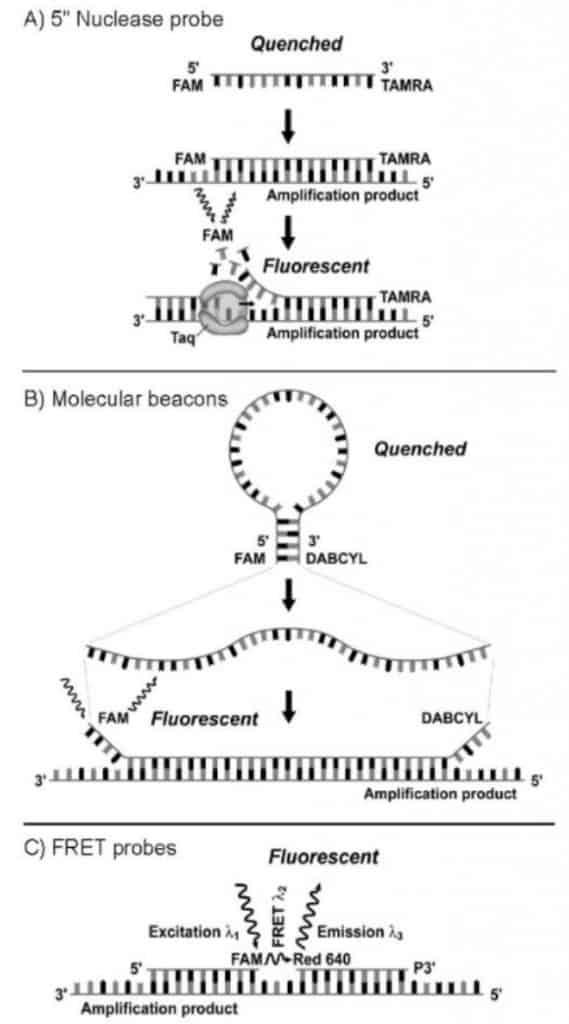 Jenis molekul petanda yang digunakan pada real-time PCR