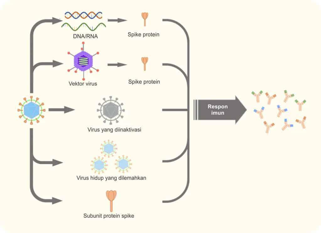 Jenis-jenis vaksin Covid-19 berdasarkan metode pemberian antigen yang dipakai