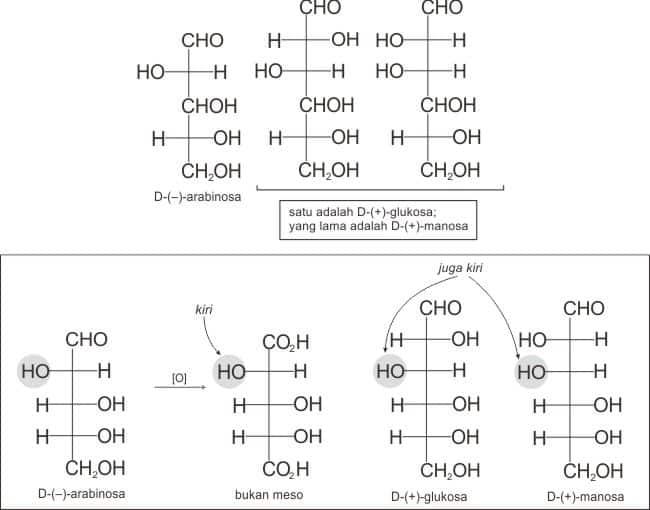 Asam aldarat hasil oksidasi D-(-)-arabinosa bersifat aktif optis maka OH pada karbon 2 harus diroyeksikan ke kiri
