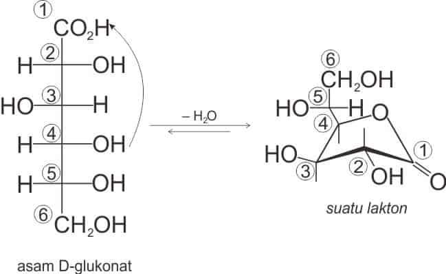 Asam D-glukonat menjadi cincin lakton