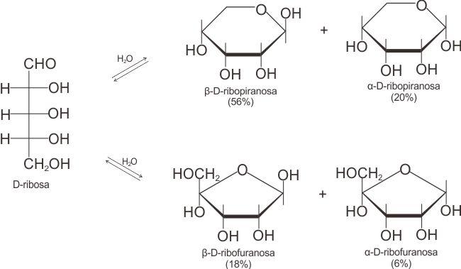 Bentuk kesetimbangan D-ribosa