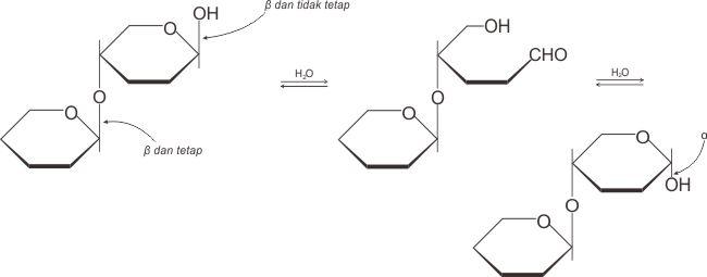 Kesetimbangan bentuk anomer dan struktur rantai terbuka dari suatu disakarida